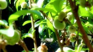 preview picture of video 'Jardinería en HD - Vallromanes Verd'