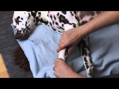 Physiotherapie Hund: Gelenke mobilisieren