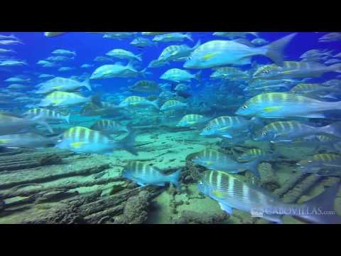 Scuba Diving at Cabo Pulmo – Baja California Sur, Mexico