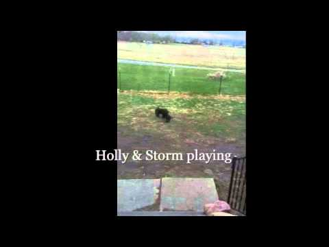 Holly and Storm playing