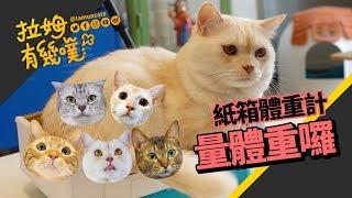 Use box to help a cat gain weight LAMUNCATS ♧