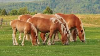 run horsie run