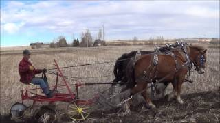 Draft Horse Plowing And Disking