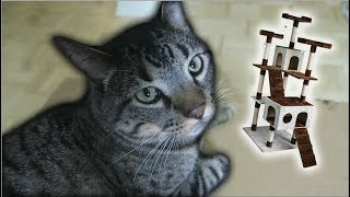 Building My Cat A Cat Tower