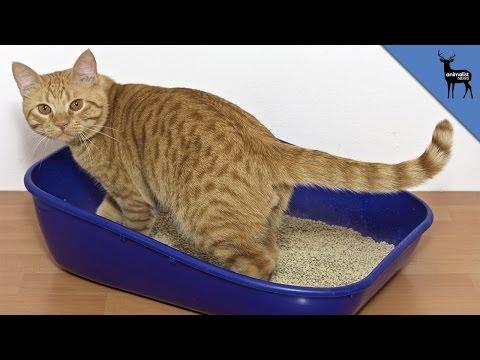 Box Cat IOS