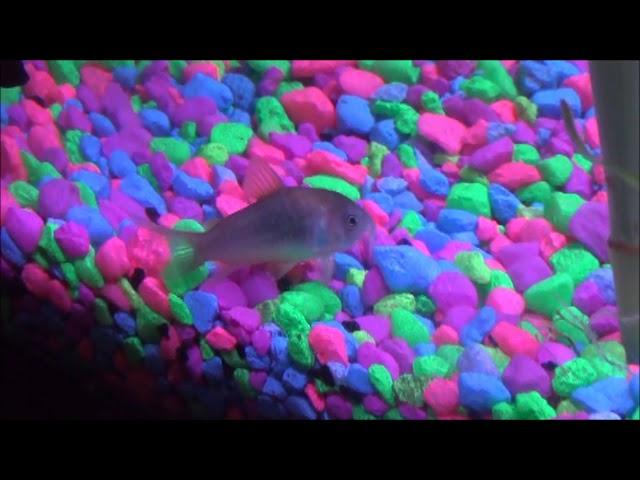 Betta Fish Tank Log