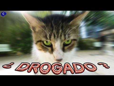 Efecto de la Valeriana en gatos ¿drogados?