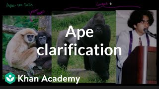 Ape Clarification