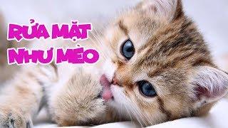 Rửa Mặt Như Mèo - Meo Meo rửa mặt như Mèo - Bé Mon | Nhạc Thiếu Nhi Vui Nhộn Sôi Động Hay Nhất
