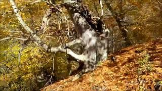ТУРИСТЫ БОЯТСЯ ХОДИТЬ В ЭТОТ Загадочный лес в россии. поход в лес. туризм в россии. аномальная зона