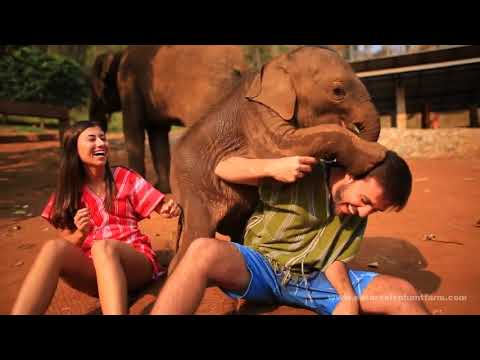 Meet happy elephants and learn to care for them