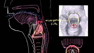 What Is Epiglottitis?