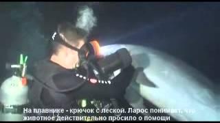 Дельфин просит помощи у человека