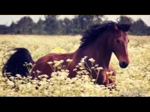 In Perm per comprare lattivatore di cavallo