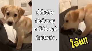 ทุกคนเลียนเสียงน้องหมา จนน้องรำคาญ แล้วสิ่งนี้เกิดขึ้น!!... #รวมคลิปฮาพากย์ไทย