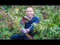 How To Prune Raspberries, Permaculture Gardening