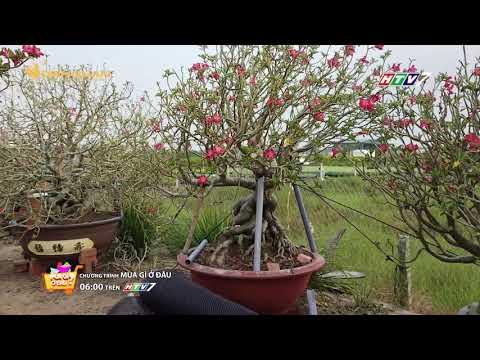 Ghé thăm vườn hoa sứ