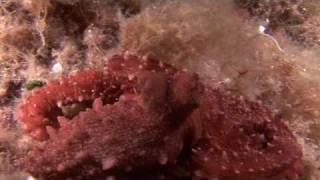 Discover Mediterraneo - Le immersioni di Tavolara