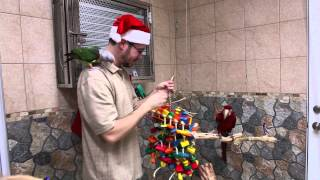 Merry Parroty Christmas 2014