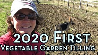 Preparing 2020 Soil - First Vegetable Garden Tilling