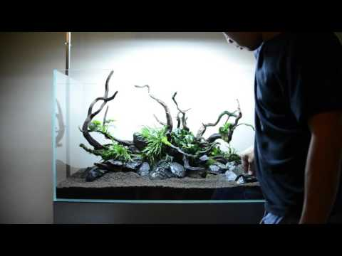 Step by step aquascape time lapse: Aqueous Reflection 90cm Aquavas