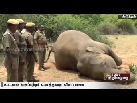 Female-elephant-found-dead-in-Dindigul