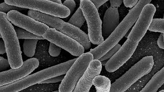 Return of the Microbes: How infections are once more taking over - Professor William Ayliffe
