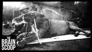 The Man-Eating Lions of Tsavo