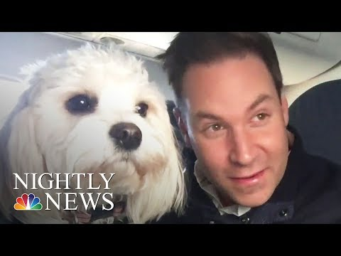 Delta Issues New Rules On Emotional Support Animals | NBC Nightly News