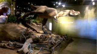 preview picture of video 'Drumheller Trip Winter 2013 - Royal Tyrrell Museum First steps'