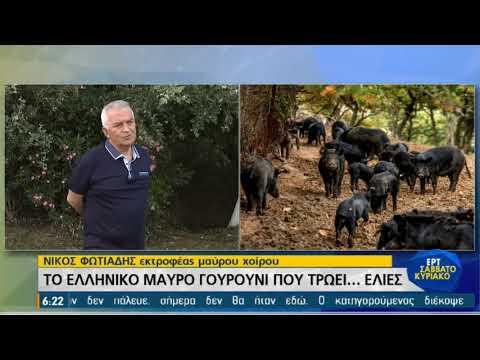 Το ελληνικό μαύρο γουρούνι που τρώει… ελιές   12/06/21   ΕΡΤ