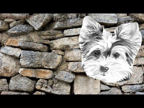 Мочекаменная болезнь у собак | Симптомы | Лечение.