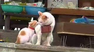 Two cats travel of master and apprentice japan kitty cute