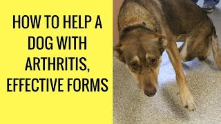 How to Help a Dog With Arthritis, Effective Forms