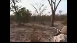 Охота на льва  Если промахнёшься, то точно загрызёт  Лев после выстрела бежит в сторону охотников  1