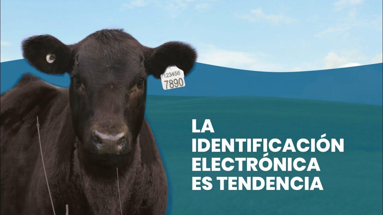 """El campo argentino se transforma, hace que las """"vacas hablen"""" y promete dólares frescos para la economía"""
