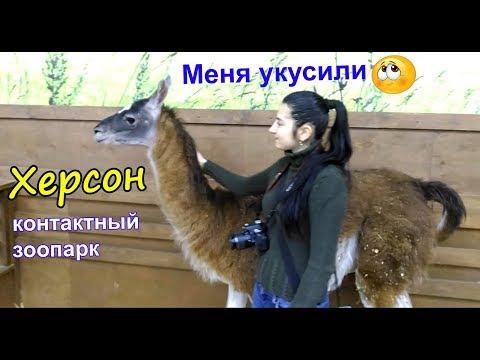 """Лошадь укусила.  Херсон (контактный зоопарк) ТРЦ """"Fabrika"""", """"Страна ЕНОТиЯ"""""""