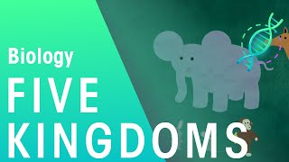 The 5 Kingdoms in Classification | Evolution | Biology | FuseSchool