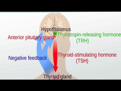 Video Graves' Disease and Hashimoto's Thyroiditis