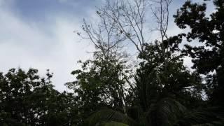 Locusts @ Union Village, Mayaro