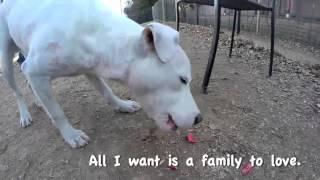 Miles at Fulton Co. Animal Shelter | Atlanta Dog Adoption | Pet Rescue