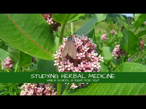 Studying Herbal Medicine: What School Should I Go To?