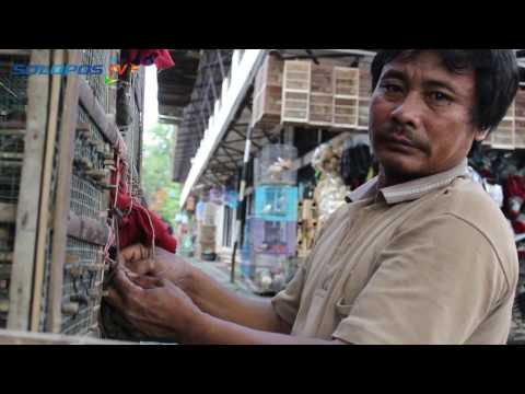 Video Ribuan Burung Pipit di Soloraya Diperdagangkan
