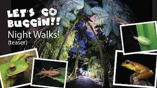 Teaser (short) video showing some of the amazing animals seen on a Let's Go Buggin Night Walk.  Frogs, Spiders, Beetles, Crickets and much more!