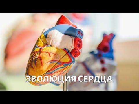 Hipertenzija gydant slaugančią motiną