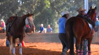 The Key To Teaching A Horse To Stand Still
