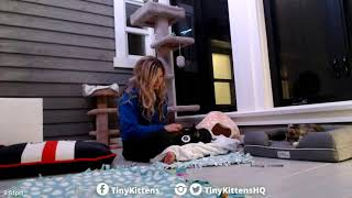 Lap time and belleh rubs with Salia - TinyKittens.com