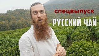 Русский чай. Краснодарский чай. Фермерское хозяйство в окрестностях Сочи.