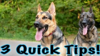 3 Quick Training Tips for German Shepherds!