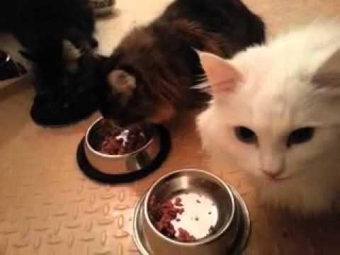Erfahrung / Test vom Katzenfutter Select Gold Sensitive Digestion